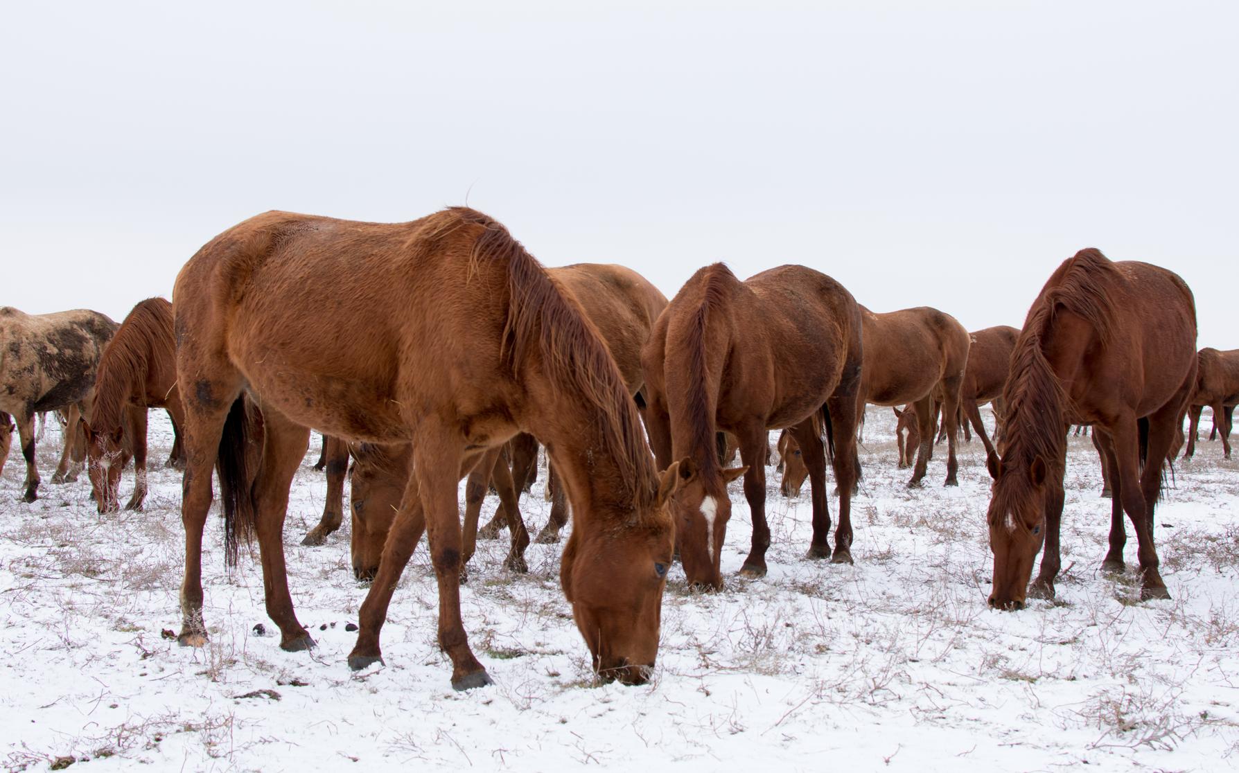 """Photo Essay """"Russian Horse Farm"""" by Maria Kislova"""